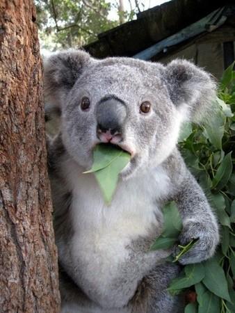 オーストラリア留学がオススメな理由